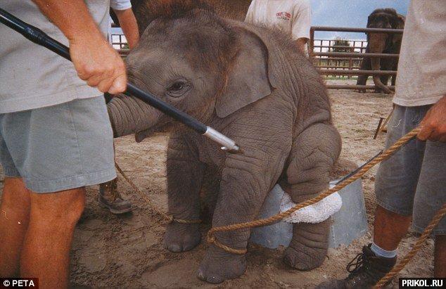 circus-elephant-07