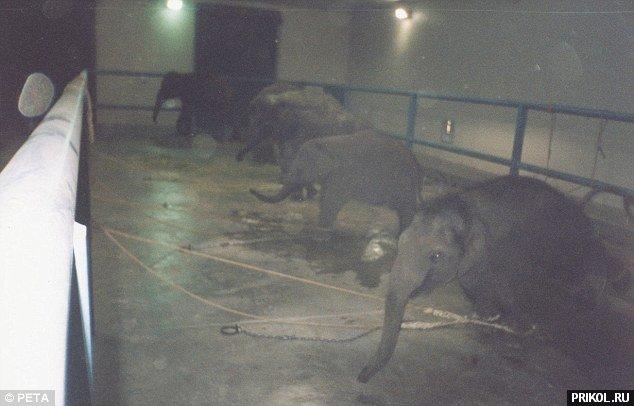 circus-elephant-09