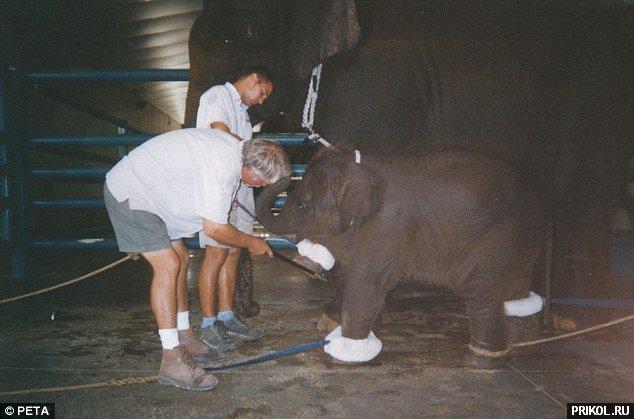 circus-elephant-10