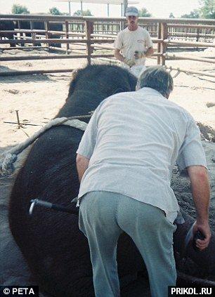 circus-elephant-11