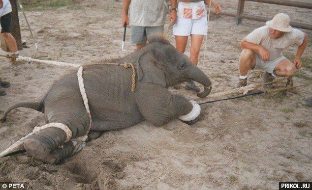 circus-elephant-12
