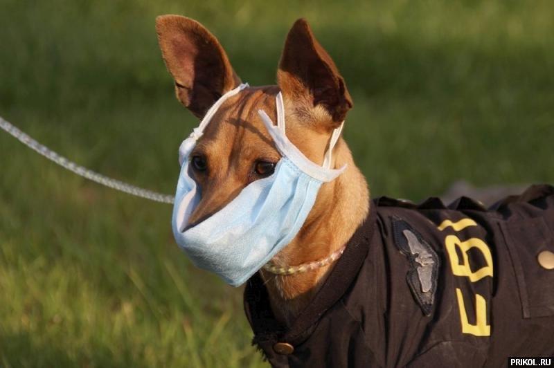 dog-mask-01