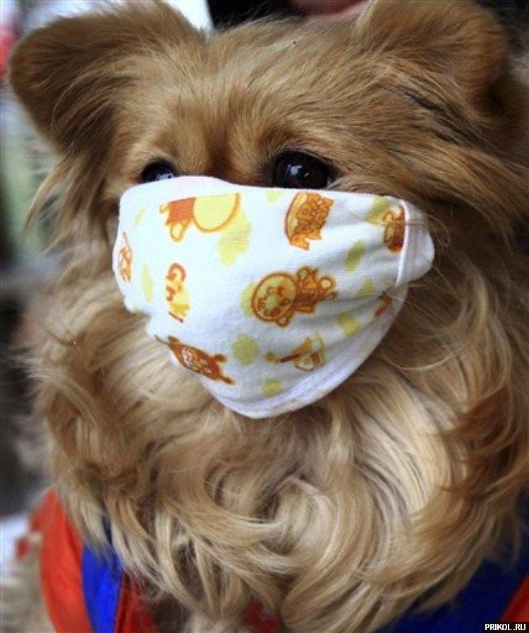 dog-mask-05