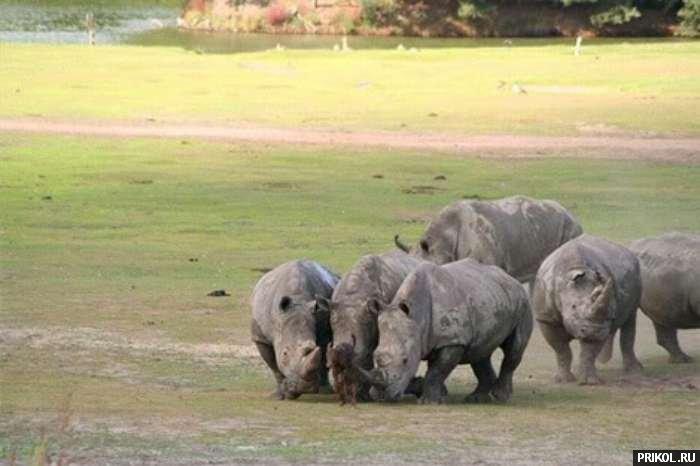 evil-rhinocero-03