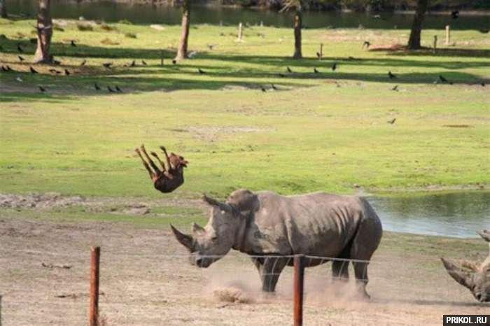 evil-rhinocero-05