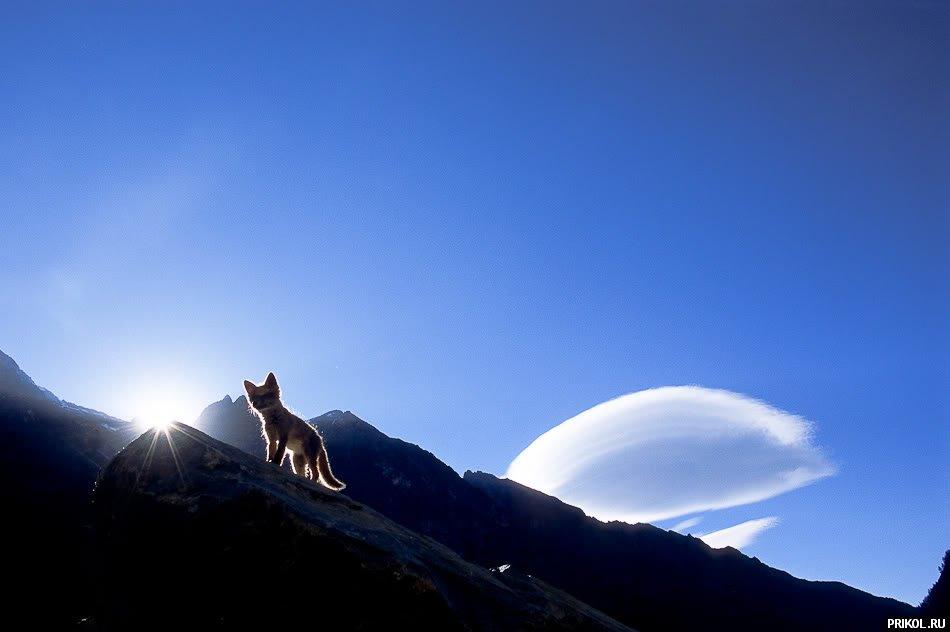 fox-fox-20