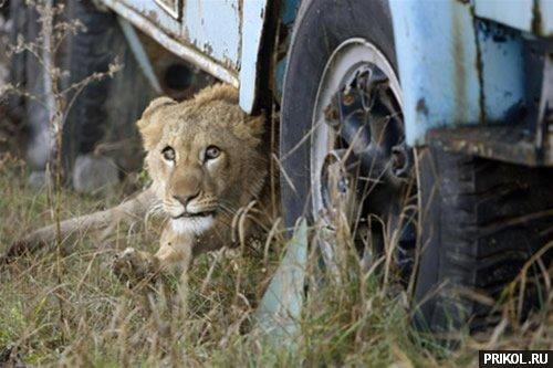 lion-frend-04