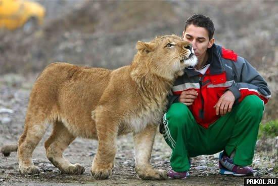 lion-frend-05