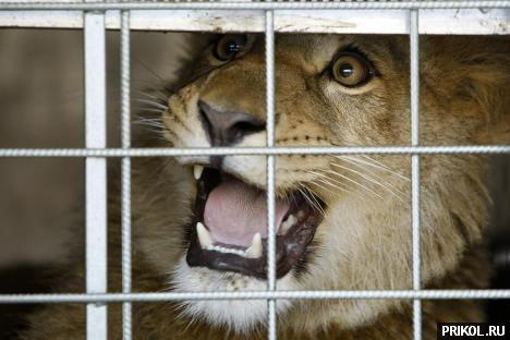 lion-frend-07