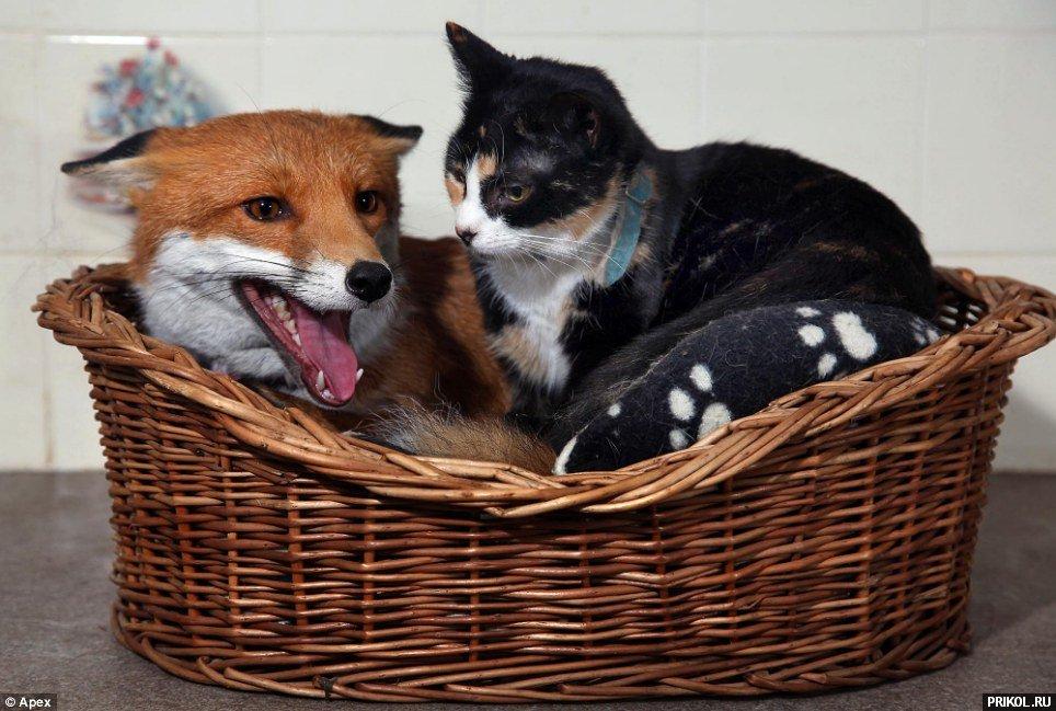milly-deaf-fox-02