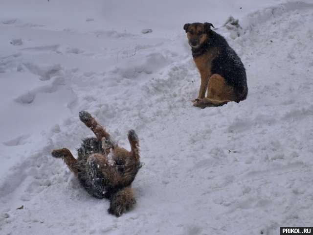 odessa-snow-storm-03