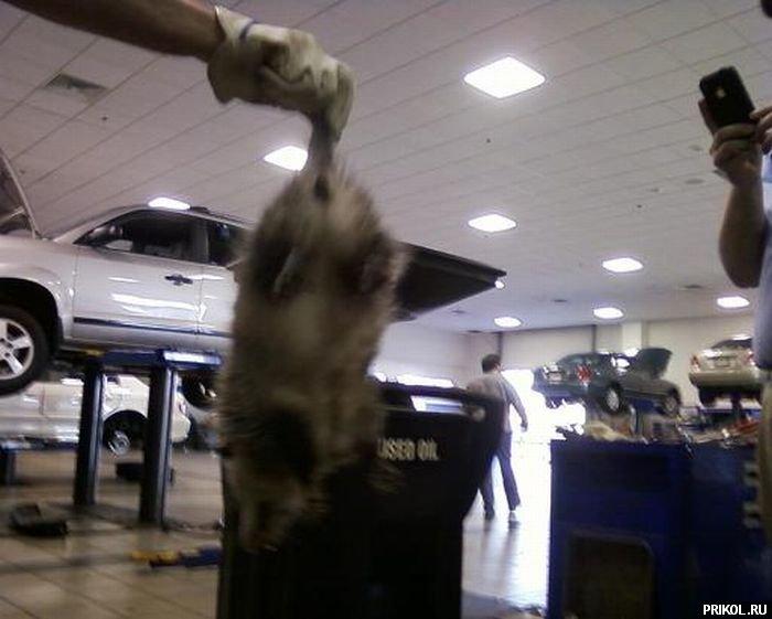 opossum-audi-06