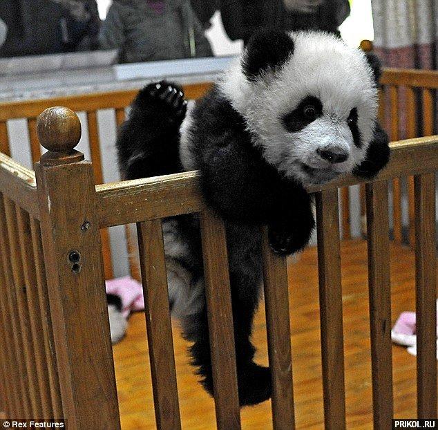 panda-escape-01