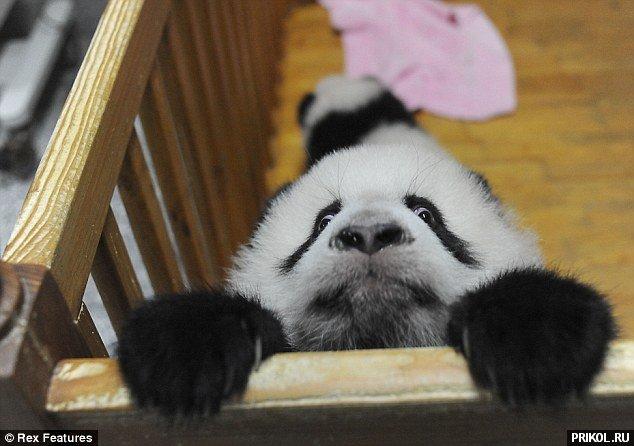 panda-escape-02