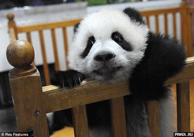 panda-escape-03