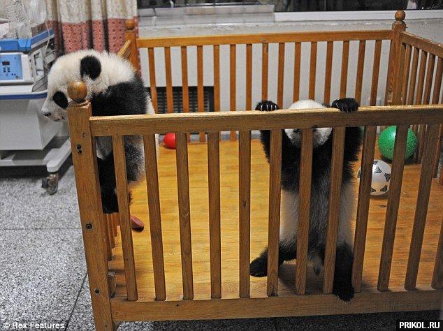 panda-escape-06