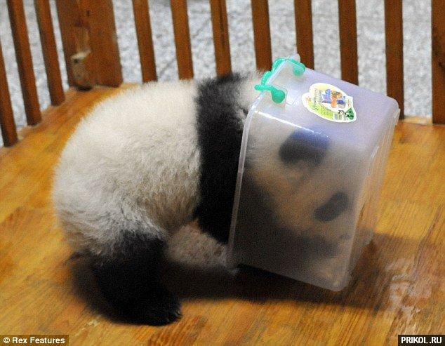 panda-escape-07