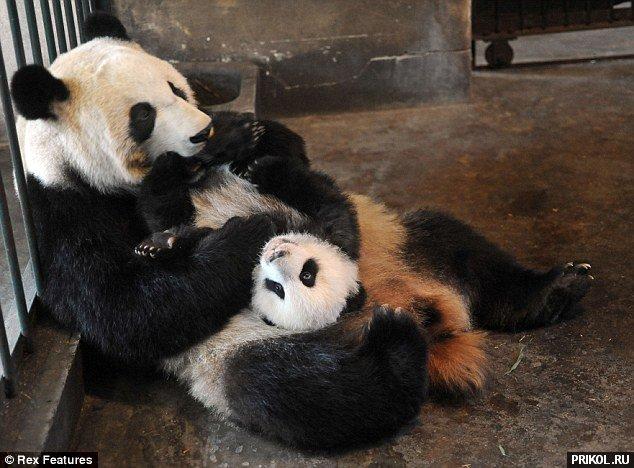 panda-escape-08