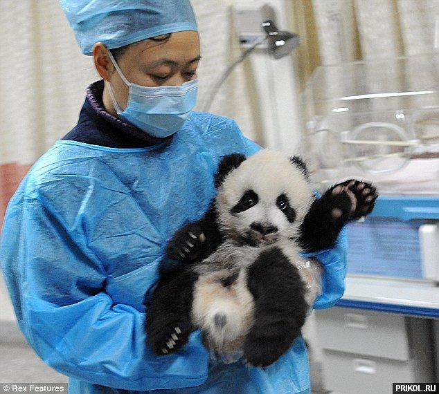 panda-escape-09