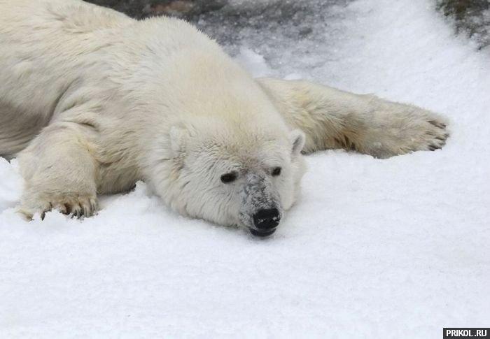 snow-bear-04
