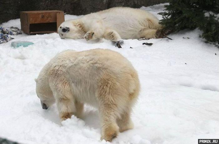 snow-bear-03