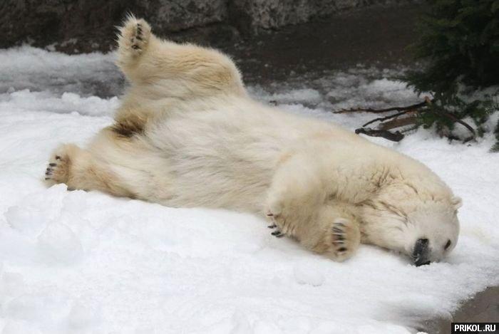 snow-bear-02