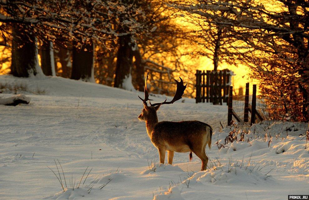 snow-scenes-11