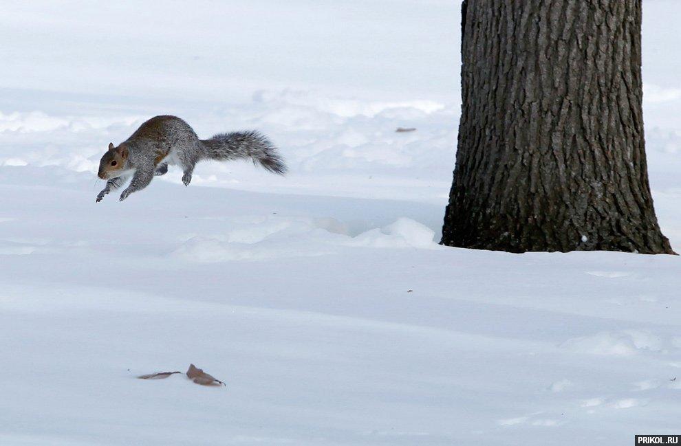 snow-scenes-24