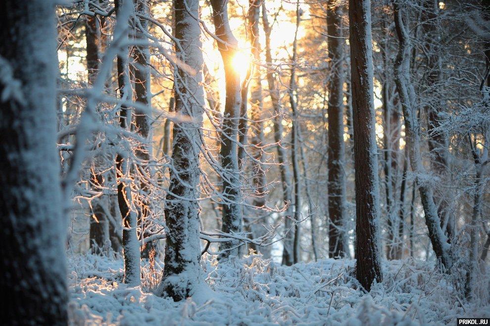 snow-scenes-28