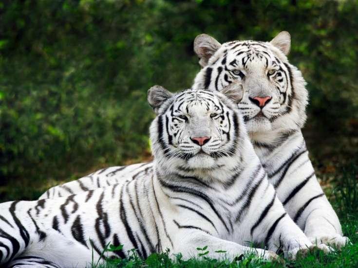 tiger-2010-02