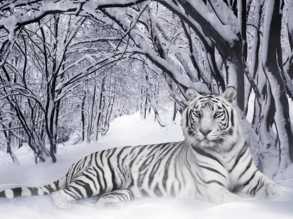 tiger-2010-05