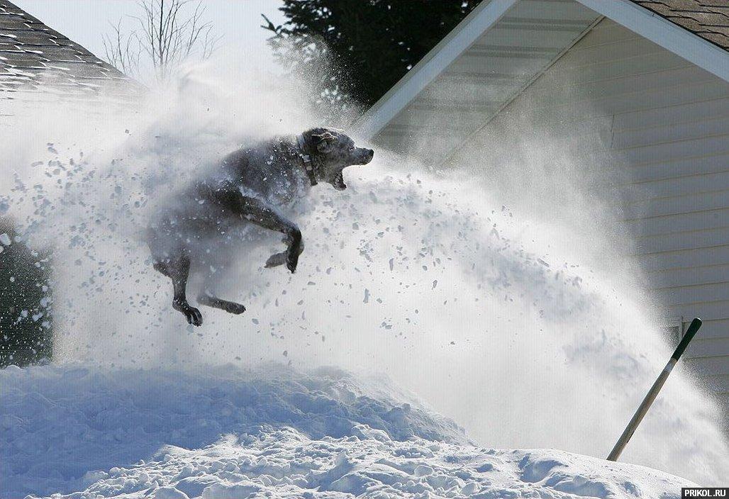 Смешная картинка снег, деловой женщине днем
