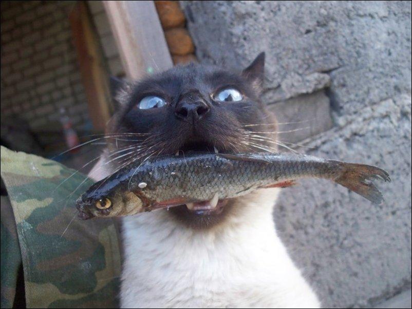 Картинки по запросу коты приколы