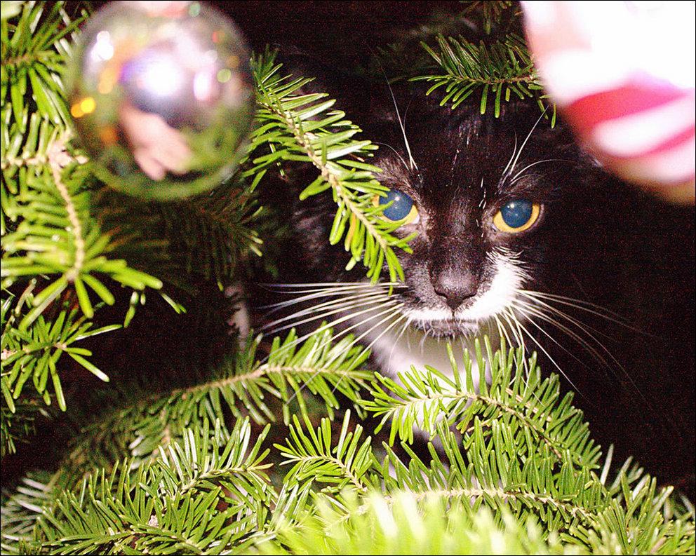 купина фото елки и котики праздника