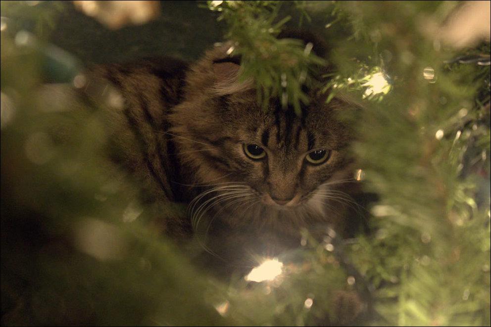 Кот на ёлке