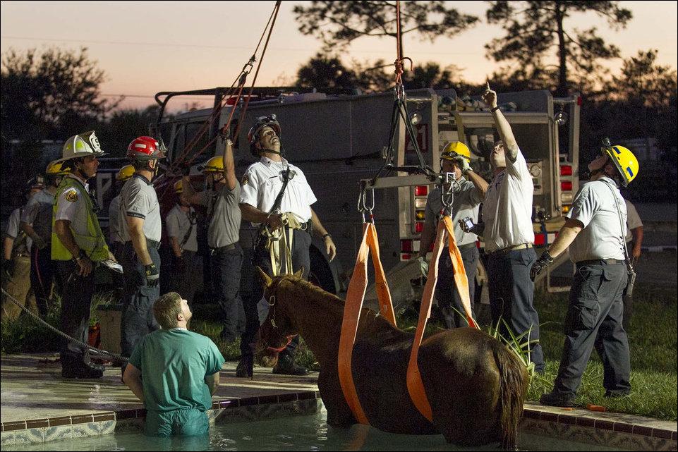 Спасение лошади из бассейна