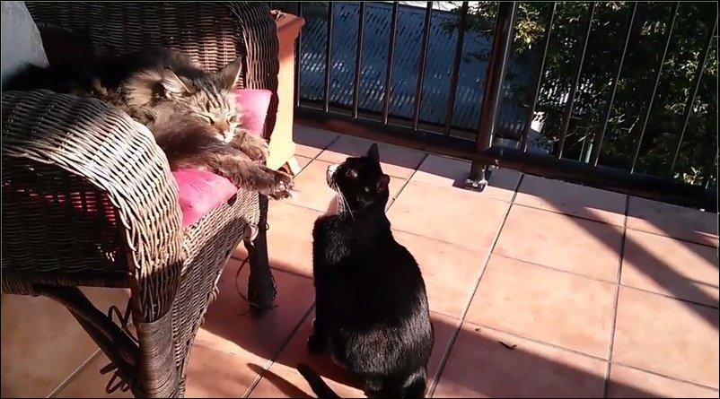 Кот испугал кота