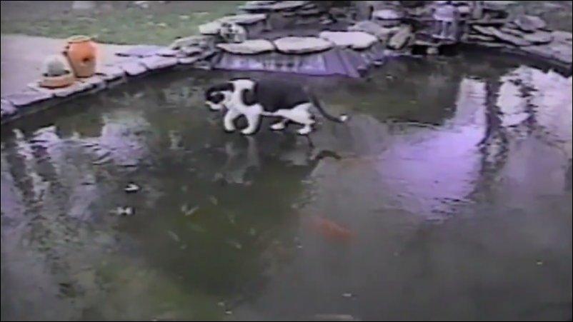 кот ловит рыбу на замерзшем пруду