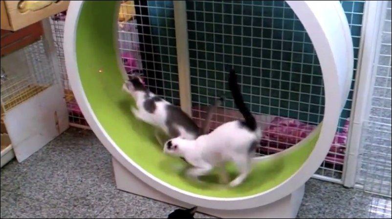 Кошачий тренажер
