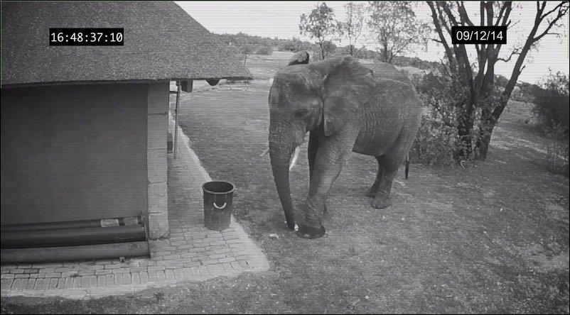 Слон убирает мусор