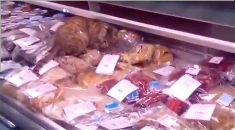 Кот поел на 60000 рублей