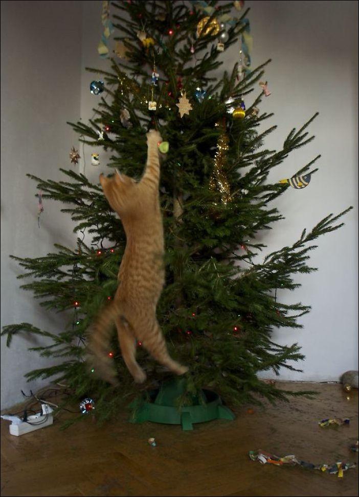 Коты наряжают елку