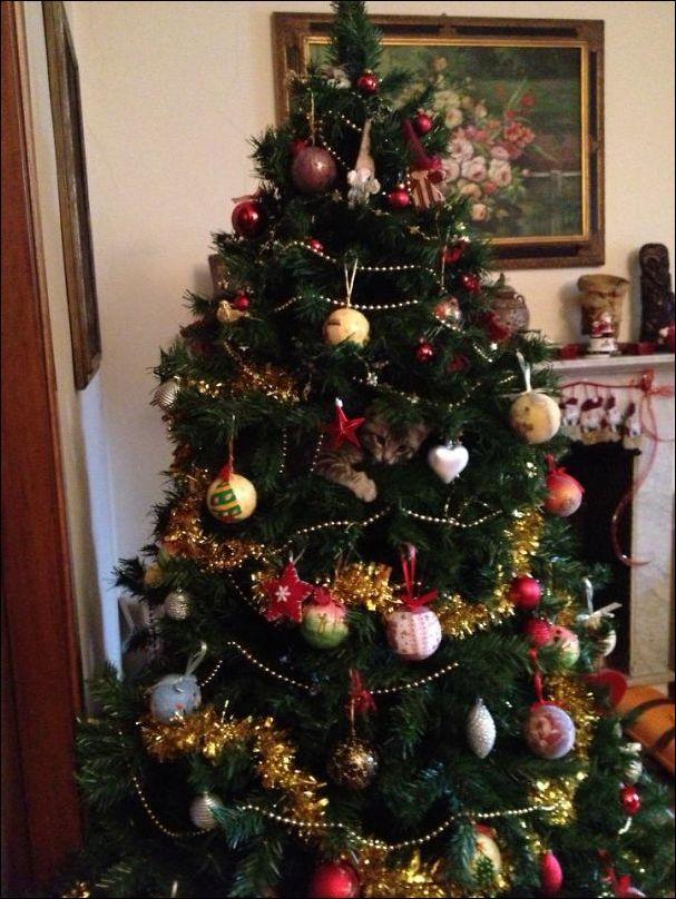 елка и домашние животные