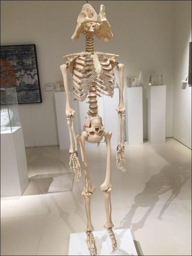 Для детского, прикольные картинки анатомия