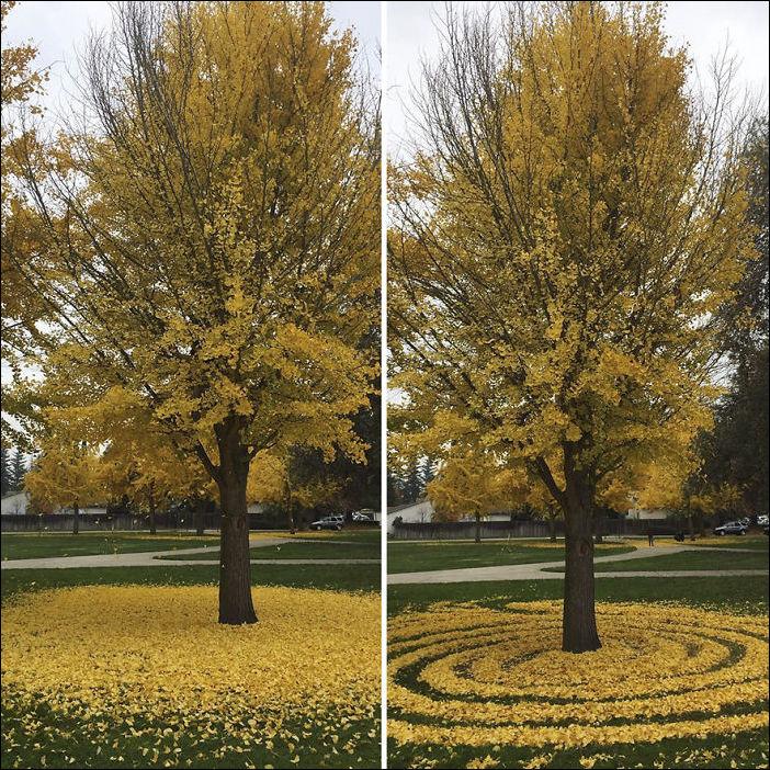 узоры из листвы