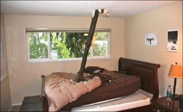Обломившаяся ветка пробила крышу