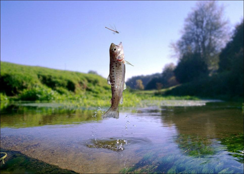 Рыбка ловит летящих мух