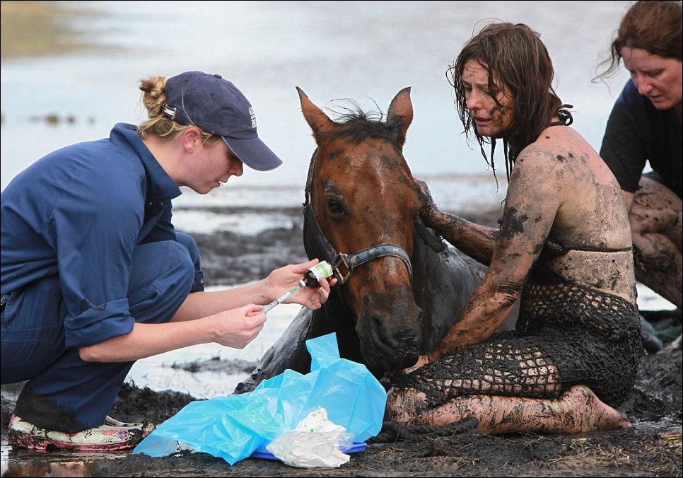 Лошадь застряла в грязи