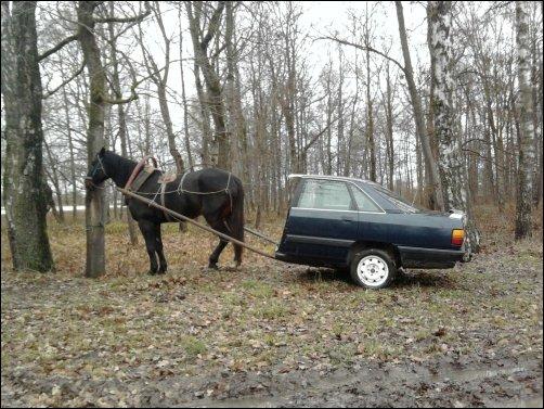 Лошадка и пол-автомобиля