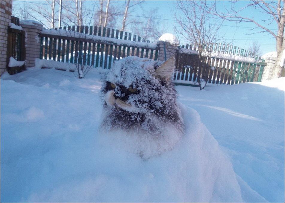 cat-in-snow-018.jpg